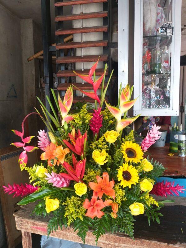 Flore exóticas en Valledupar