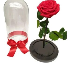 Rosa preservadas en valledupar
